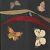 The Butterfly Effect  folder