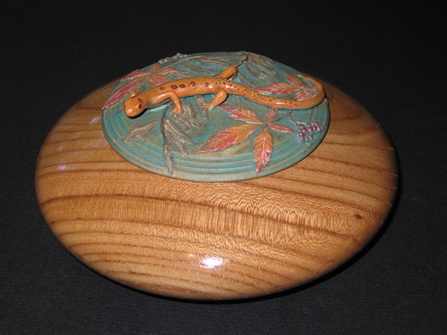 Salamander on English Elm