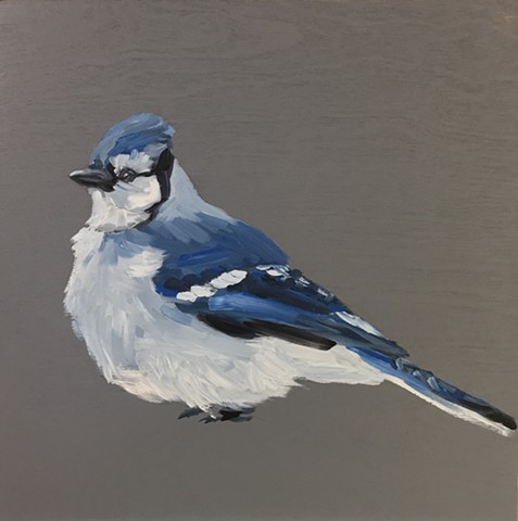 Sorry  flew away happily - Fluffy Bluejay