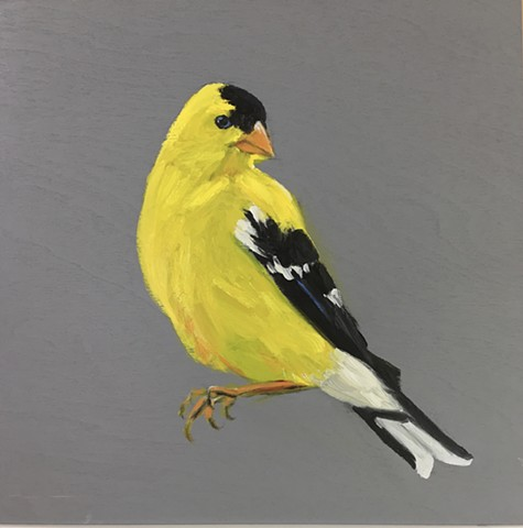 Sorry  flew away happily - North American Golfinch