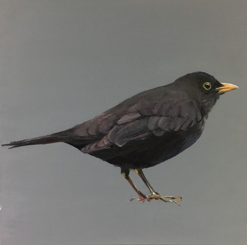 Mr. Blackbird