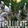 Understories III: Pullulate