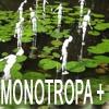 Understories II: Monotropa / Queens (Click on images to enlarge)