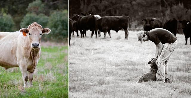 Blackwood Valley Beef