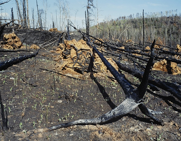 Prescribed Burn Near Magnetic Rock, Gunflint Trail, Superior National Forest 2003