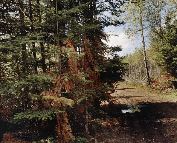 Logging Road Near Greenwood Creek 2001