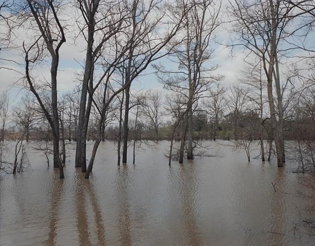 Black Bayou, Glendora, Mississippi 2016