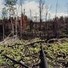 Last Spring's Fire, Near Elbow Lake, Minnesota 2000