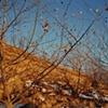 Moonrise Behind Mo's House, Missouri Valley, Harrison County, Iowa 2000