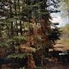 Logging Road Near Greenwood Creek 2001