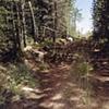 Logging Road off Upland Trail 2001