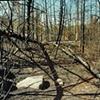 Prescribed Burn, Blowdown Area, Gunflint Trail Superior National Forest 2004