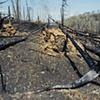 Prescribed Burn Near Magnetic Rock, Gunflint Trail, Superior National Forest 2003