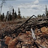 Blowdown Debris, Near Aspen Lake, Gunflint Trail, Superior National Forest 2001