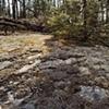 Lichen, U. S. Forest Service Road 1351, Gunflint Trail 2003