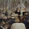 Poplars, North of Babbitt, Minnesota 2002