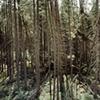 Sawbill Trail 2001
