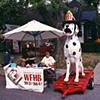 Spot, The Firehouse Dog