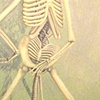 skeleton happily giving birth