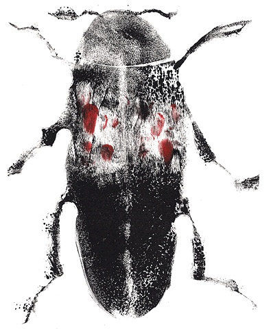 Red Marks Beetle