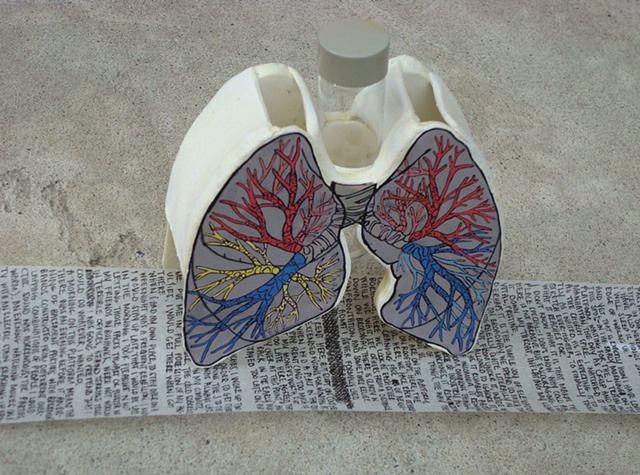 Lungs with scroll removed