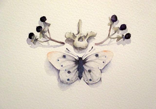 watercolor, bones, vertebrae, butterfly, painting