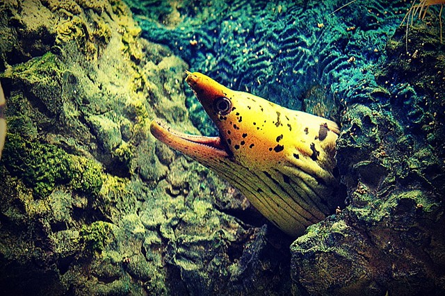 eel, ocean, sea, photo, photography, art, krista glavich, monterey, aquarium