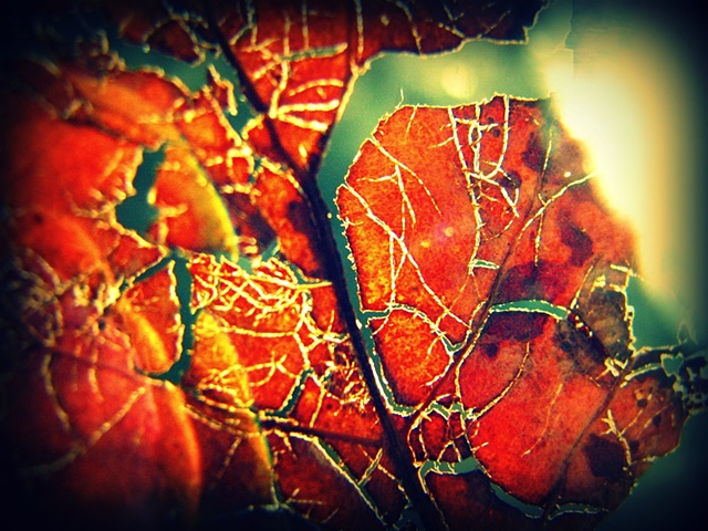 Autumn leaf detail