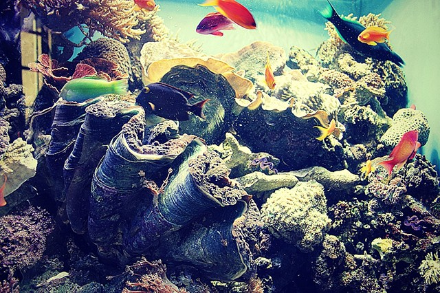 fish, ocean, sea, photo, photography, art, krista glavich, monterey, aquarium