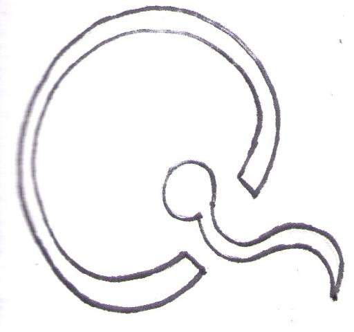 Q = Fertilization