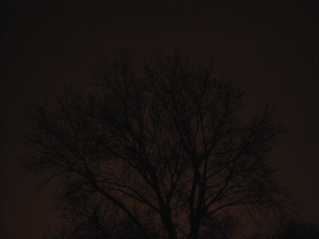 walk night tree