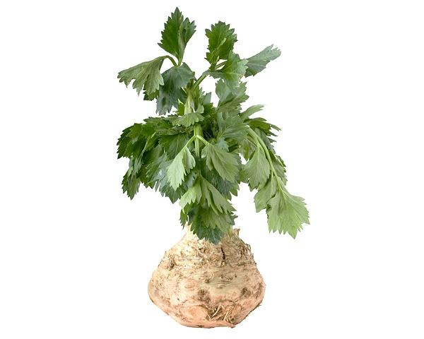 Celery Root