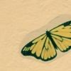Aria Lepidoptera