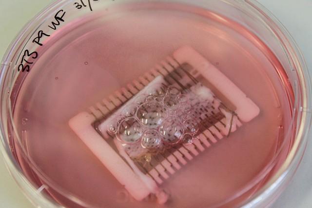 Biotextile IV
