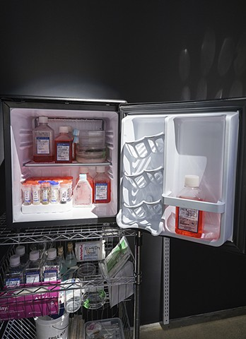 The Ossificatorium, detail: lab fridge