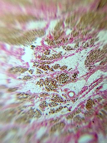 Abstract Microscopy VI