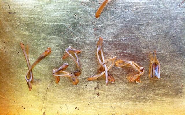 Chrysopoeia, detail