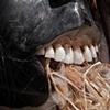 Alma, detail: teeth