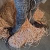 Alma, detail: feet