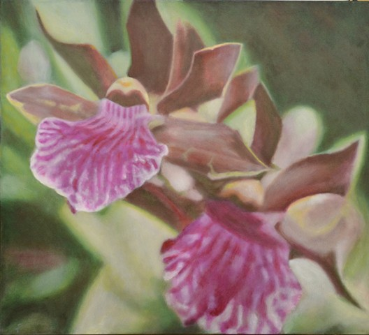 Spray of Magenta Orchids