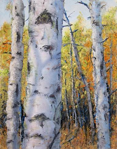 Fall Birch Shadows