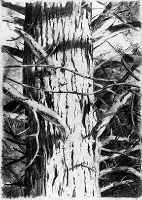 Redwood Series #1