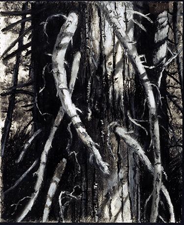 Redwood Series #4