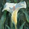 Skylar's Lily 2