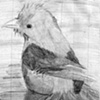 South American Bird