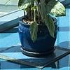 Domesticated Plant Study #1
