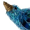 Blue wren series