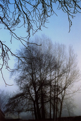 Trees in Mist #6
