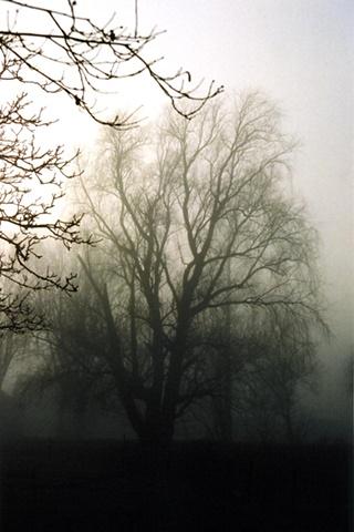 Trees in Mist #4