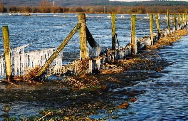 Rhine River #9